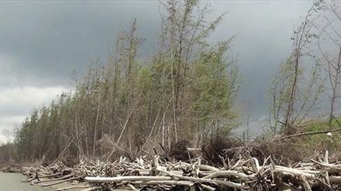 Bến Tre: Bảo vệ rừng gắn với phát triển sản xuất