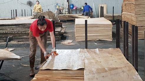 Nhiều 'rào cản' kìm hãm sự tăng trưởng xuất khẩu ngành gỗ dán