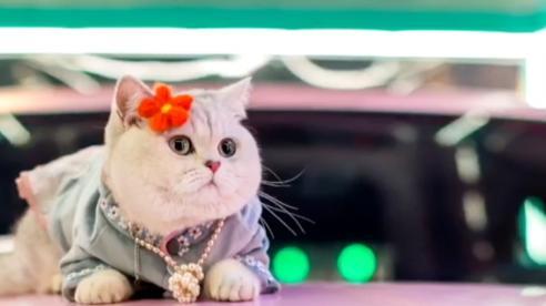 Người mẫu mèo 'làm mưa làm gió' ở triển lãm ô tô Trung Quốc