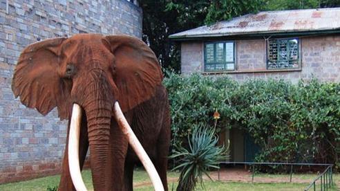 Những điểm đến không thể bỏ qua ở Kenya