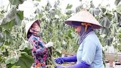 Bến Tre: Quỹ hỗ trợ nông dân hỗ trợ vốn cho 800 lượt dự án