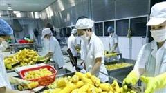 Xuất khẩu nông sản của Việt Nam tăng trưởng hơn 30% trong bối cảnh dịch Covid-19