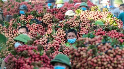 Không 'ngăn sông, cấm chợ' xe chở vải thiều từ Bắc Giang