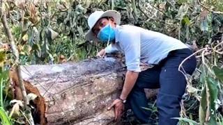 Khởi tố vụ phá rừng tự nhiên quy mô lớn