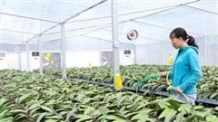 Sản xuất hoa, cây cảnh: Hướng phát triển kinh tế mũi nhọn