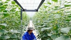 Bùng nổ mô hình nhà kính công nghệ cao ở Trung Quốc