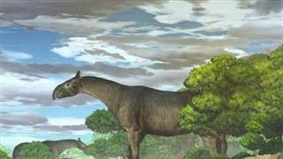Phát hiện hóa thạch của loài tê giác khổng lồ cao trên 6m, nặng hơn 20 tấn