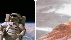 'Mực không gian', sinh vật giúp phi hành gia khỏe mạnh hơn?