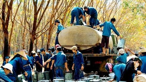 Đài Loan tăng nhập khẩu cao su từ Việt Nam