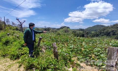 Vụ phá sản dự án trồng 100 ha rừng: Kon Tum chỉ đạo kiểm tra