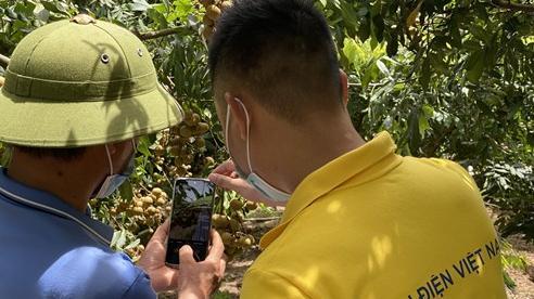 Nông dân Hưng Yên sẽ bán nhãn trên sàn thương mại điện tử