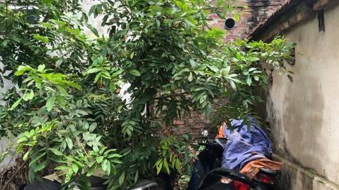 Xe SH xếp đống góc vườn, bụi chuối, bị phát hiện khi nhóm chuyên 'nhảy' SH ở Hà Nội sa lưới