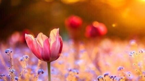 Tử vi tuần mới 19/7 - 25/7: Tuổi Tỵ đào hoa nở rộ, tuổi Thìn tài lộc rực rỡ