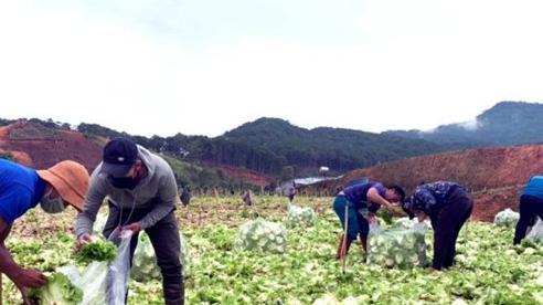 Thêm những 'chuyến xe yêu thương' từ Lâm Đồng về các vùng dịch