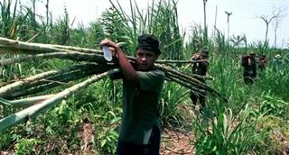 Tiết lộ về những kỹ năng sinh tồn của du kích FARC
