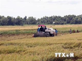 Phối hợp cùng doanh nghiệp lên phương án thu hoạch, tiêu thụ nông sản
