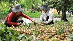 Tìm cách thông tuyến cho nông sản