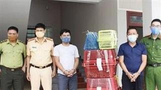 Nghệ An: Bắt giữ hai đối tượng cùng 7 cá thể hổ con còn sống