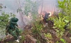 Đốt vàng mã làm cháy gần 15ha rừng tại Bình Định