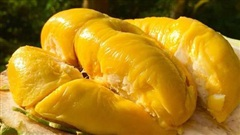 4 nhóm thực phẩm 'đại kỵ' với sầu riêng, tránh ăn cùng nhau để phòng ngộ độc