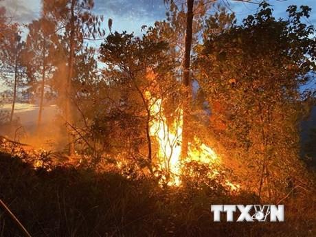Thừa Thiên-Huế: Nắng nóng gay gắt, liên tiếp xảy ra 7 vụ cháy rừng