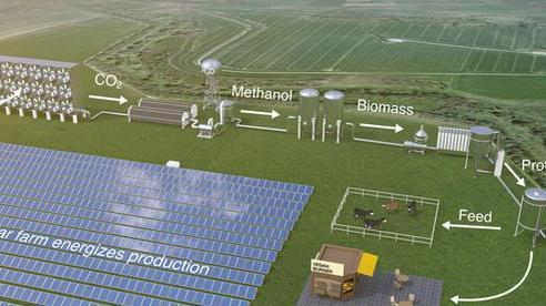 Sản xuất lương thực từ vi sinh vật bằng năng lượng mặt trời
