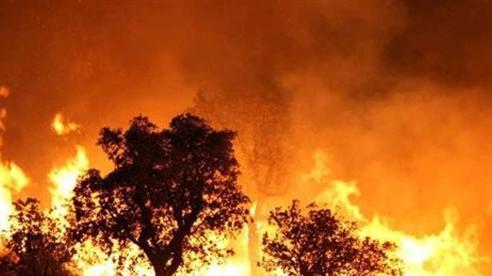 Cháy rừng dữ dội tại Algeria, hơn 40 người thiệt mạng