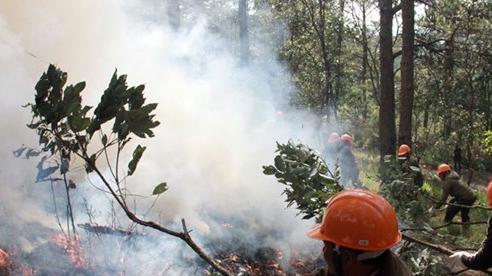 Lâm Đồng: 5,5 tỷ đồng bảo vệ, phòng cháy chữa cháy rừng