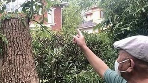 Tranh cãi chuyện người đàn ông bị phạt hơn 21.000 USD vì tỉa cây tự trồng trước nhà