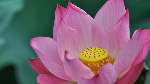 5 loài hoa nên bày trên bàn thờ ngày Rằm tháng 7 để rước nhiều tài lộc