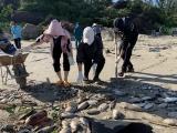 [Ảnh] Quảng Ngãi: Xót xa chôn hàng chục tấn cá bị chết do bão số 5