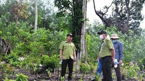 Phú Yên khởi tố các vụ phá rừng