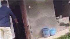 Video: Bị nắm đuôi, rắn hổ mang chúa dọa người đàn ông khiếp vía