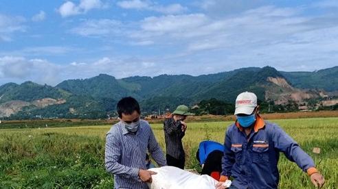 Huyện Thạch Thất huy động các lực lượng hỗ trợ người dân thu hoạch lúa Hè Thu 2021