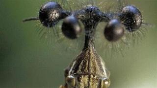 'Sinh vật ngoài hành tinh' sống trên Trái Đất gương mặt vô cùng đáng sợ