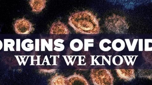 Báo Mỹ nói về nguồn gốc Covid-19, khả năng SARS-CoV-2 tồn tại hàng trăm năm, từ dơi lây sang người