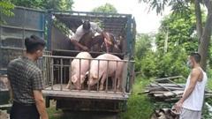Giá lợn hơi ngày 18/9/2021: 2 miền Bắc - Nam biến động 1.000 - 2.000 đồng/kg