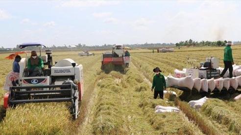 Các địa phương đẩy mạnh thu hoạch, vận chuyển lúa