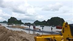 Dùng 'cát lậu' trong dự án mở rộng đường bao biển, một đối tượng bị truy tố