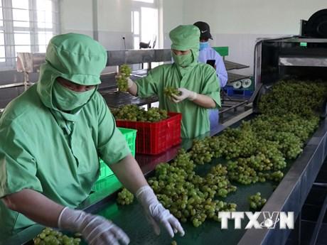 Ninh Thuận thành lập Tổ công tác đặc biệt hỗ trợ doanh nghiệp