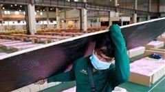 Thái Lan sửa đổi luật về bệnh truyền nhiễm, tiêm vaccine cho khoảng 4,5 triệu học sinh