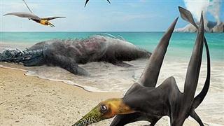 Sinh vật chưa từng thấy trên thế giới 'hiện về' từ siêu lục địa tan vỡ