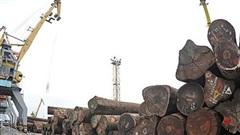 Chủ động nguồn nguyên liệu gỗ, đáp ứng đơn hàng xuất khẩu cuối năm