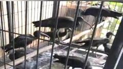 Phạt 11 năm tù đối tượng nuôi nhốt động vật hoang dã