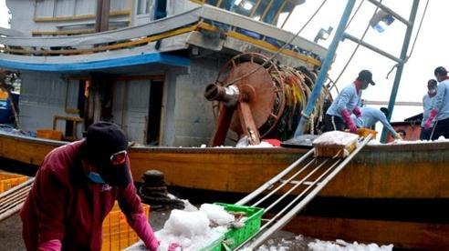 Ngư dân Bình Thuận quay lại biển sau giãn cách