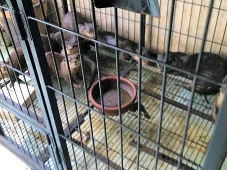Phạt 11 năm tù đối tượng nuôi nhốt lượng lớn cá thể động vật hoang dã