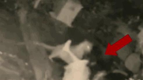 Video: Bị báo gấm tấn công, người phụ nữ 'phản đòn' quyết liệt