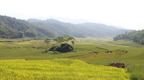 Vẻ đẹp mê mẩn mùa vàng ở Pù Luông - Sa Pa của xứ Thanh