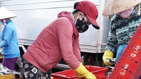 Quảng Ngãi mở cửa cảng cá, cho phép vận tải khách tuyến Lý Sơn - Sa Kỳ