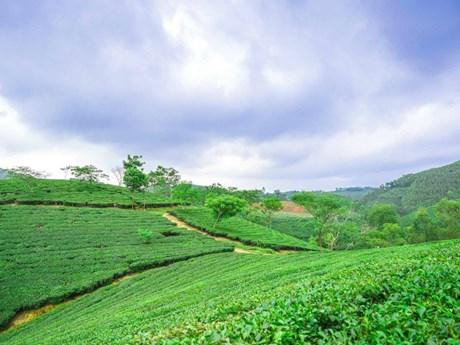 Ngôi làng đặc biệt trên thảo nguyên Ruộng Đò ở Quảng Ngãi